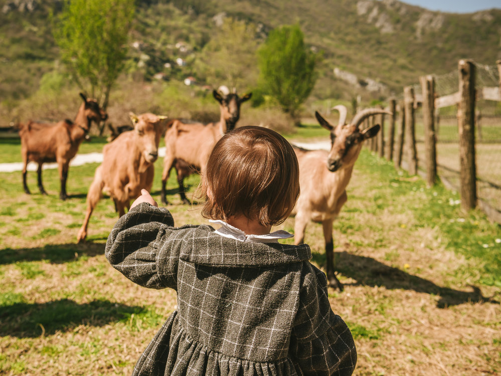 Playing with goats at a Montenegro Farmstay near Lake Skadar.
