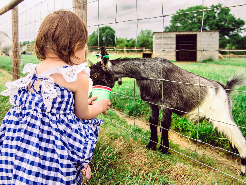 The best part of Mini Meadows Farm was feeding the animals. Lisa Loved it!