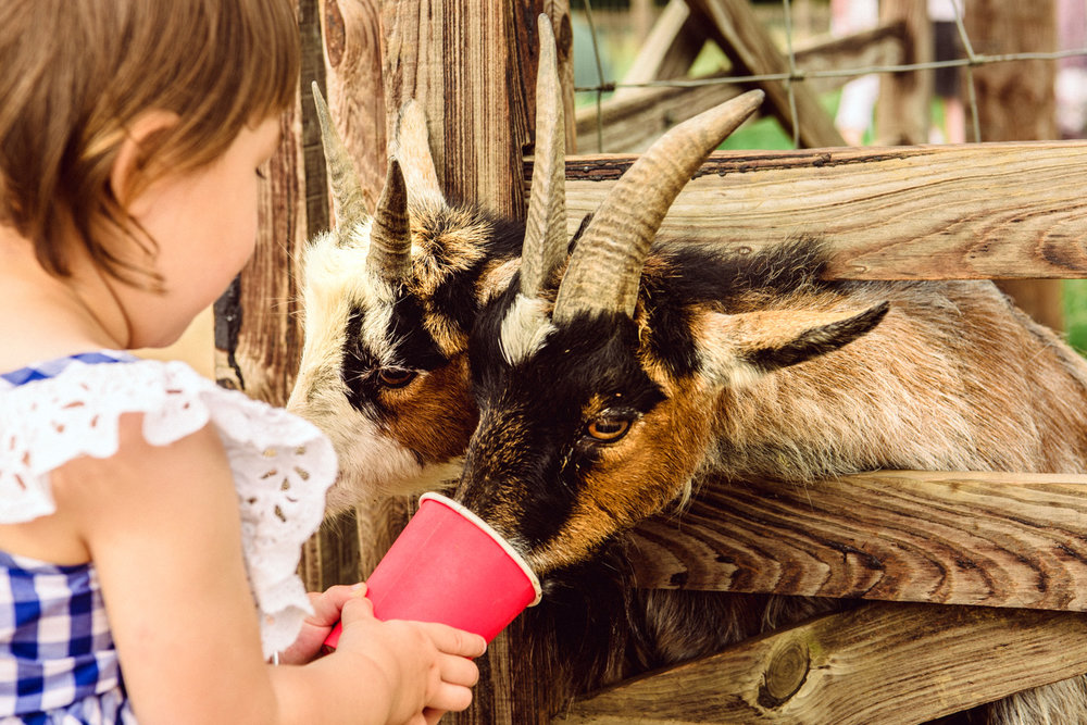 Our toddler feeding to hungry goats during our travel in England.