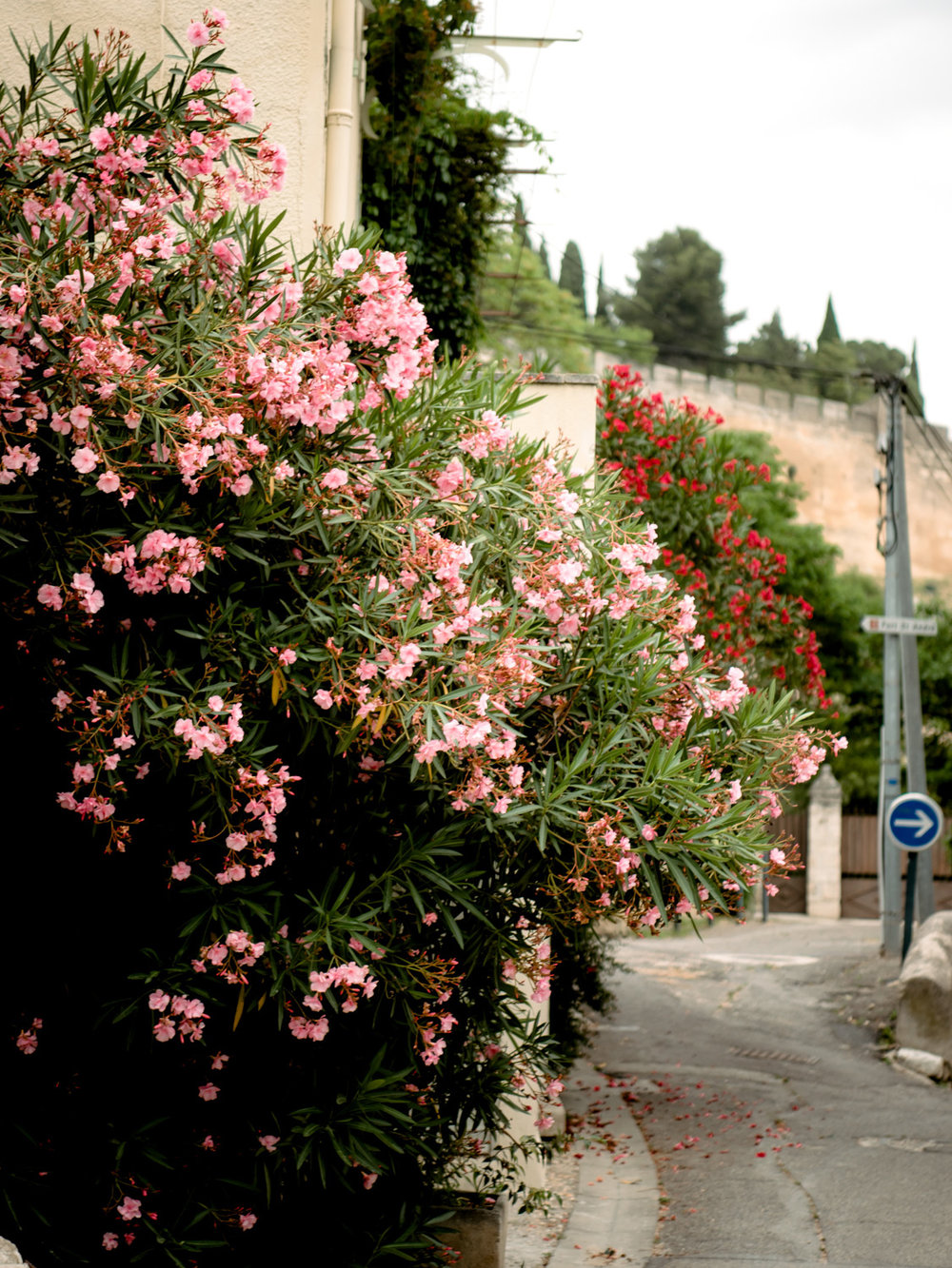 More beautiful flowers in Villeneuve-lès-Avignon.