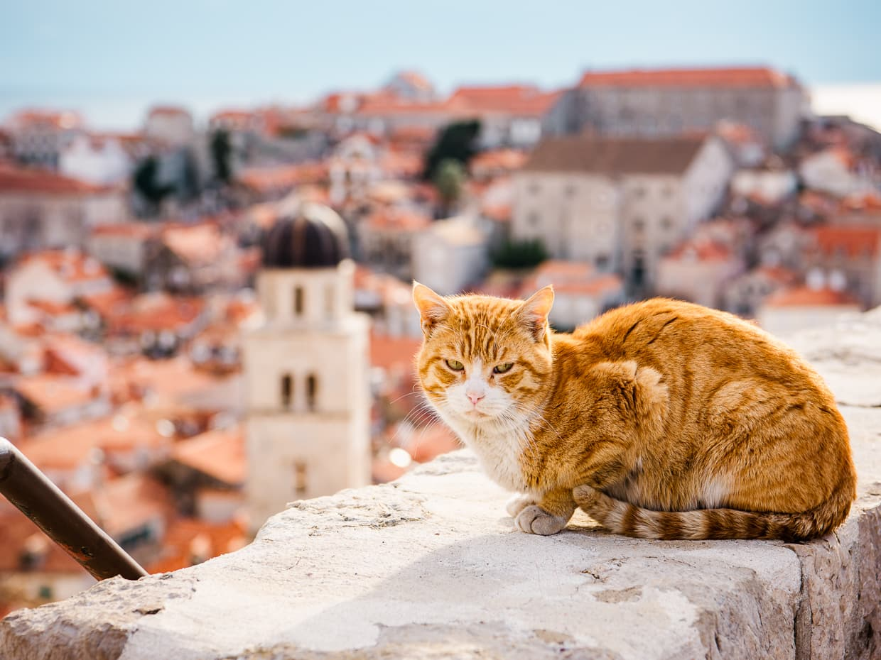 A cat sunning itself in Dubrovnik, apparently unconcerned about the height of the city walls.