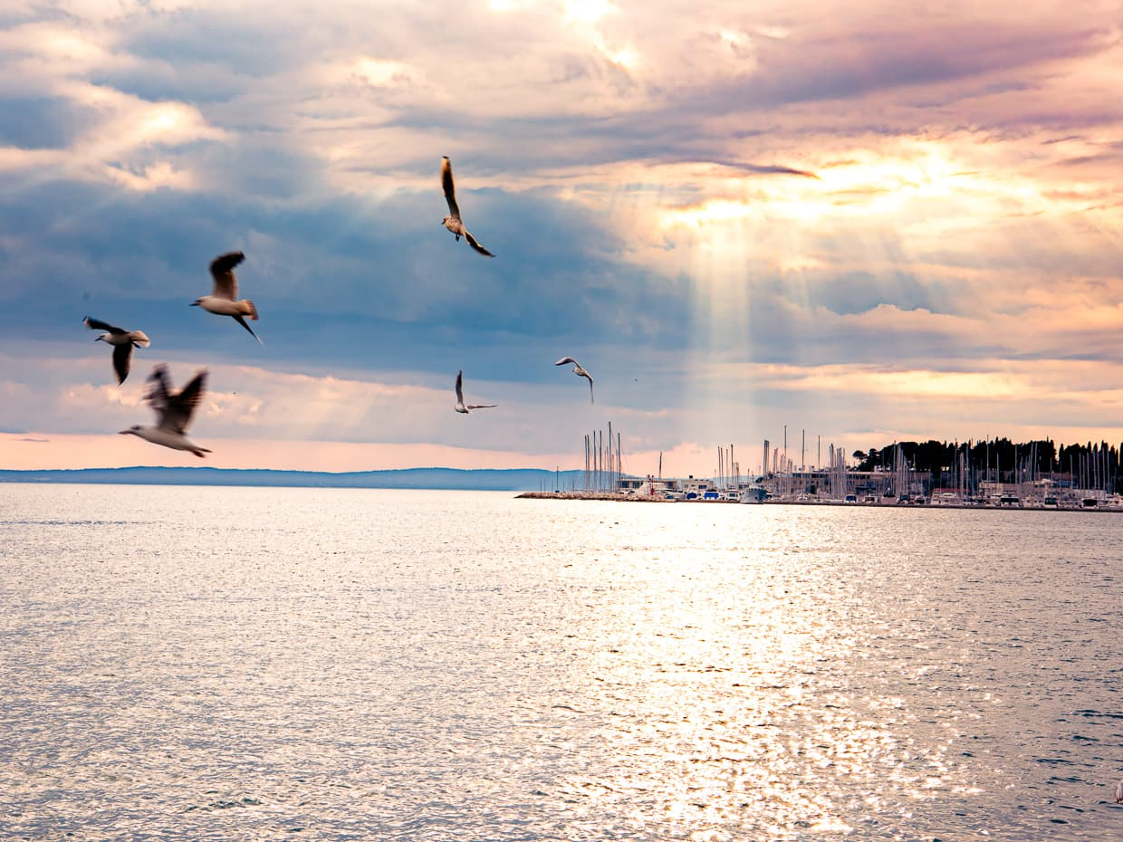 A sunset with birds over the Split Harbor. Taken from the waterfront promenade.