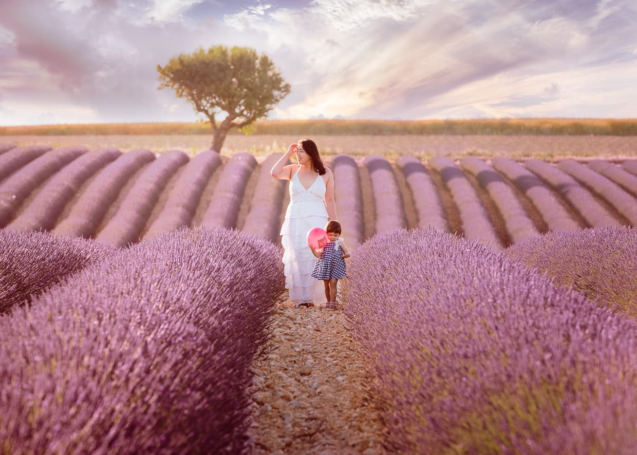 Rows of Lavender in Provence, France in the town of Valensole