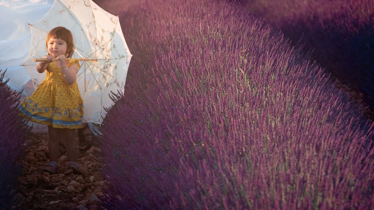 Walking in rows of lavender in Provence France with a parasol.
