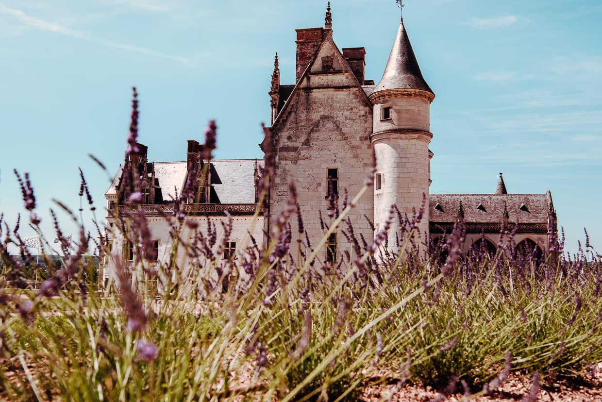 French lavender in Amboise in front of the Chateau Royale.