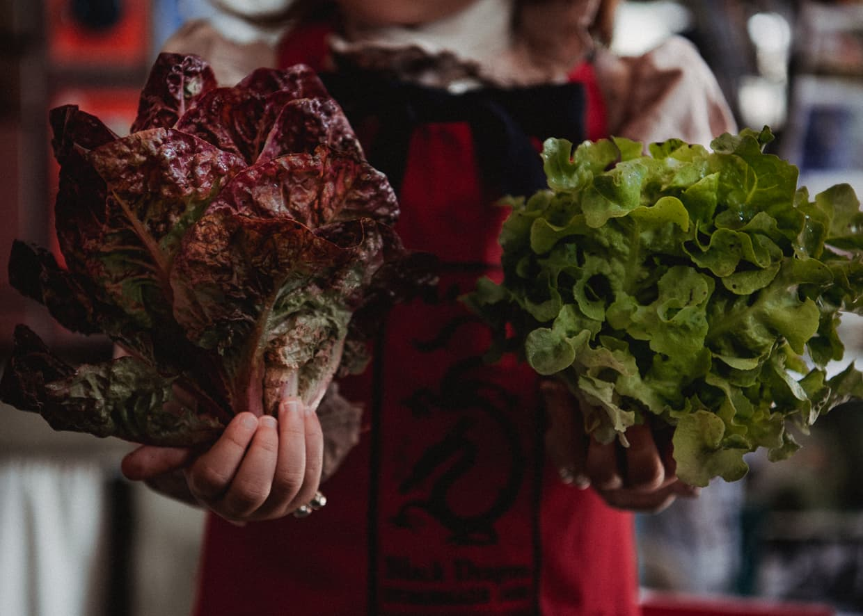 Two heads of lettuce held by 2 year old Lisa.