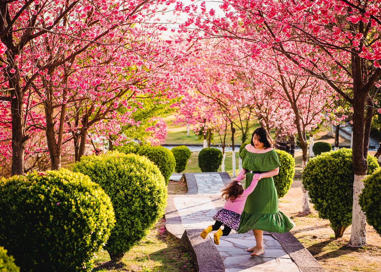 Dancing on on stairs under cherry blossoms in Dali, China.