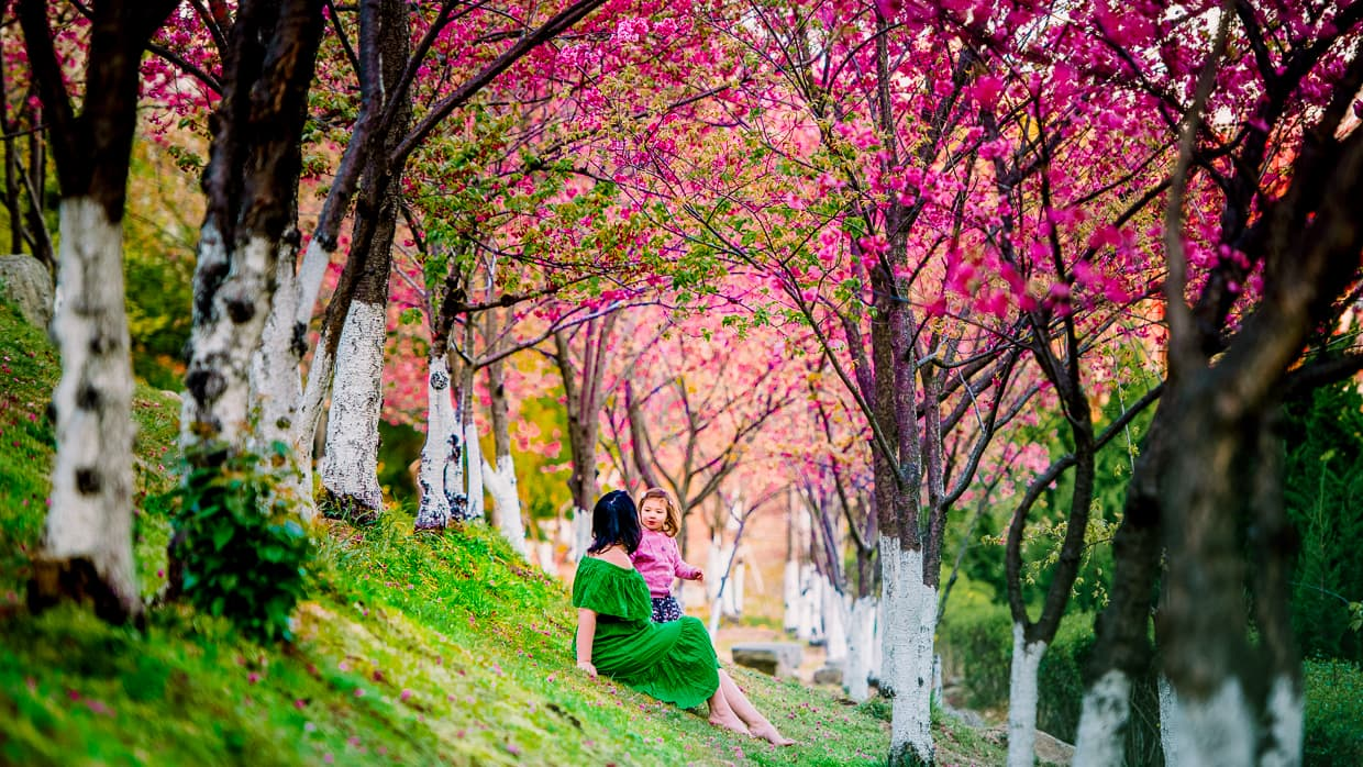 Sitting under cherry blossom trees in Dali, China.