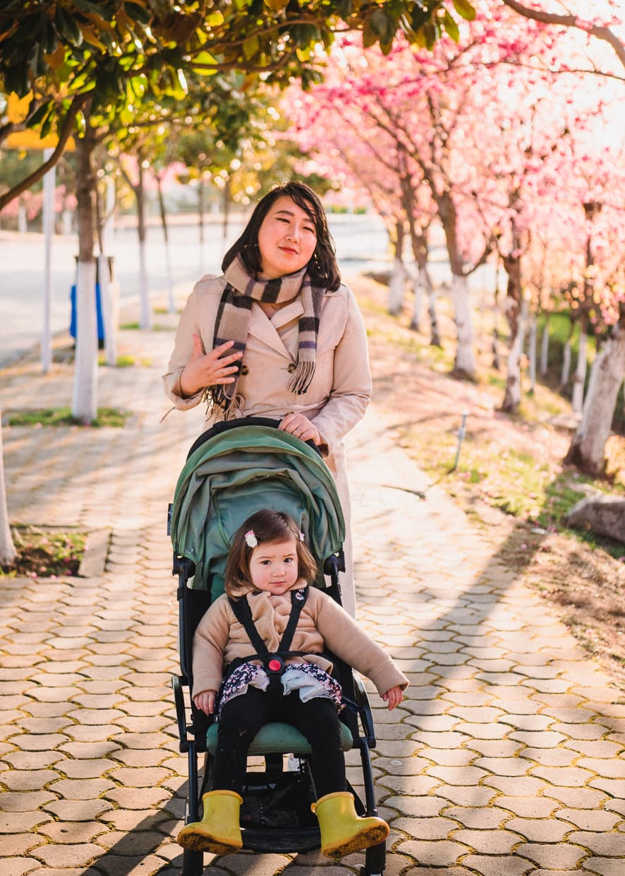 Pushing a stroller under cherry blossoms at Dali University in China.