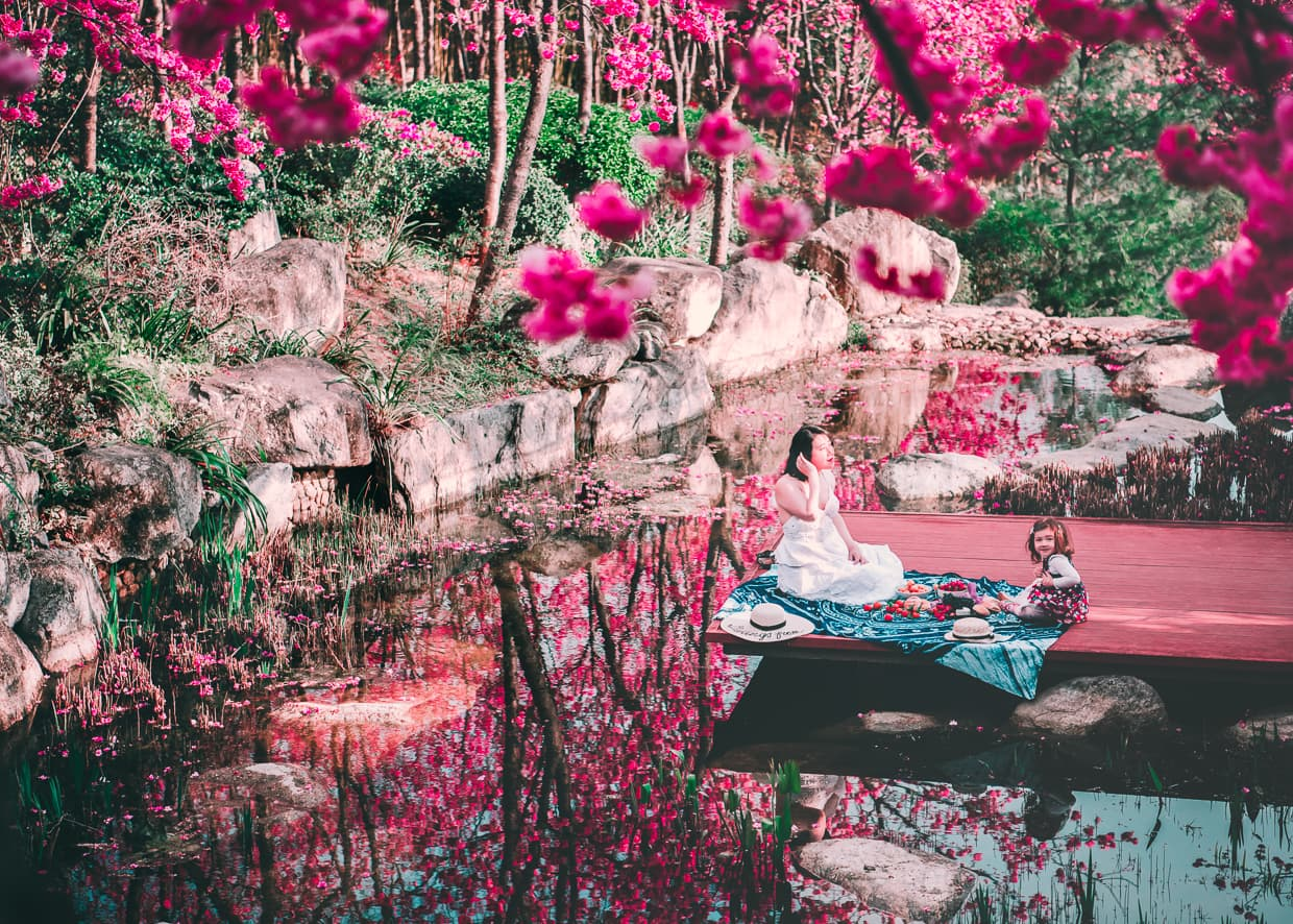 A picnic over water with cherry blossoms. Dali, China.