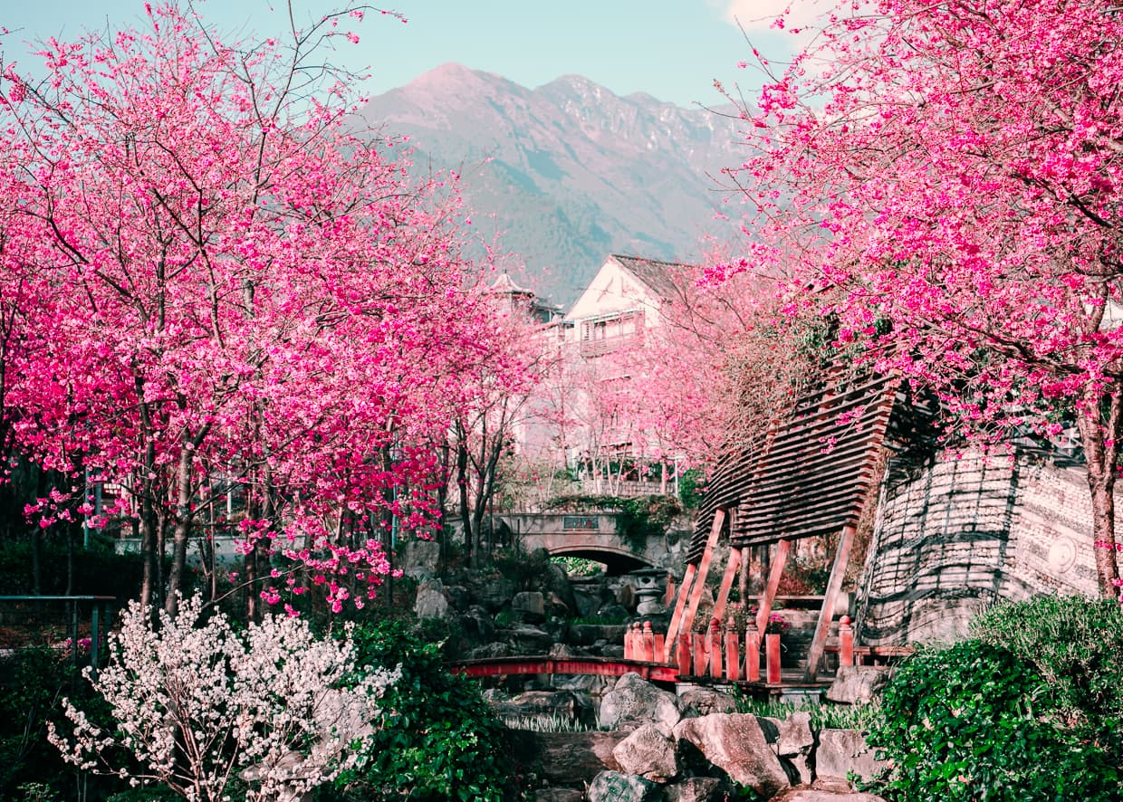 The Cherry blossom valley with Cangshan Mountain in the background. Dali, China.