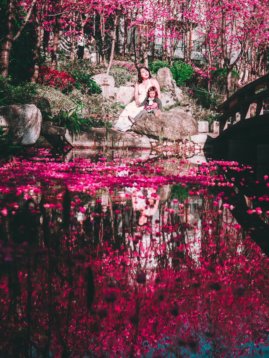 Cherry blossom petals floating in water in Dali, China.