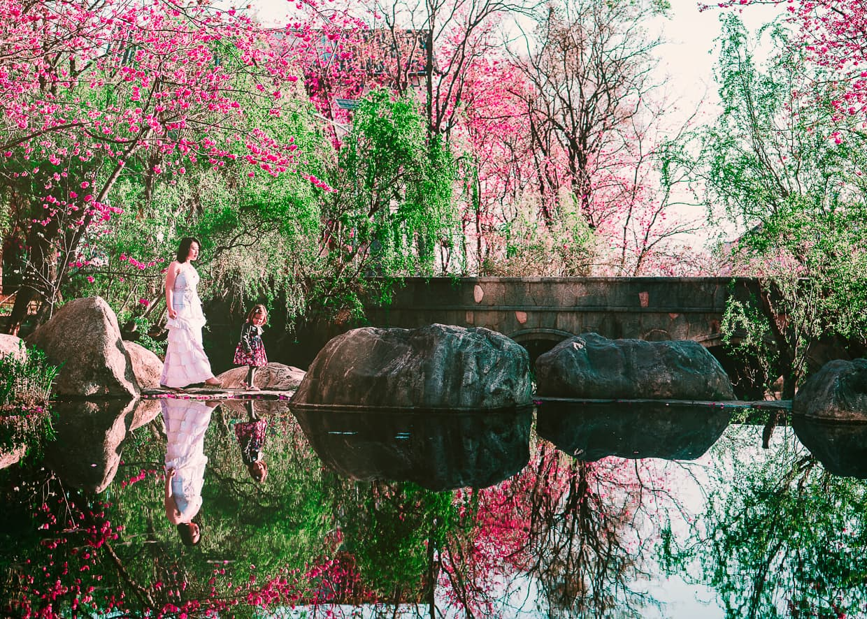 Cherry blossoms and a reflection in Dali, China.