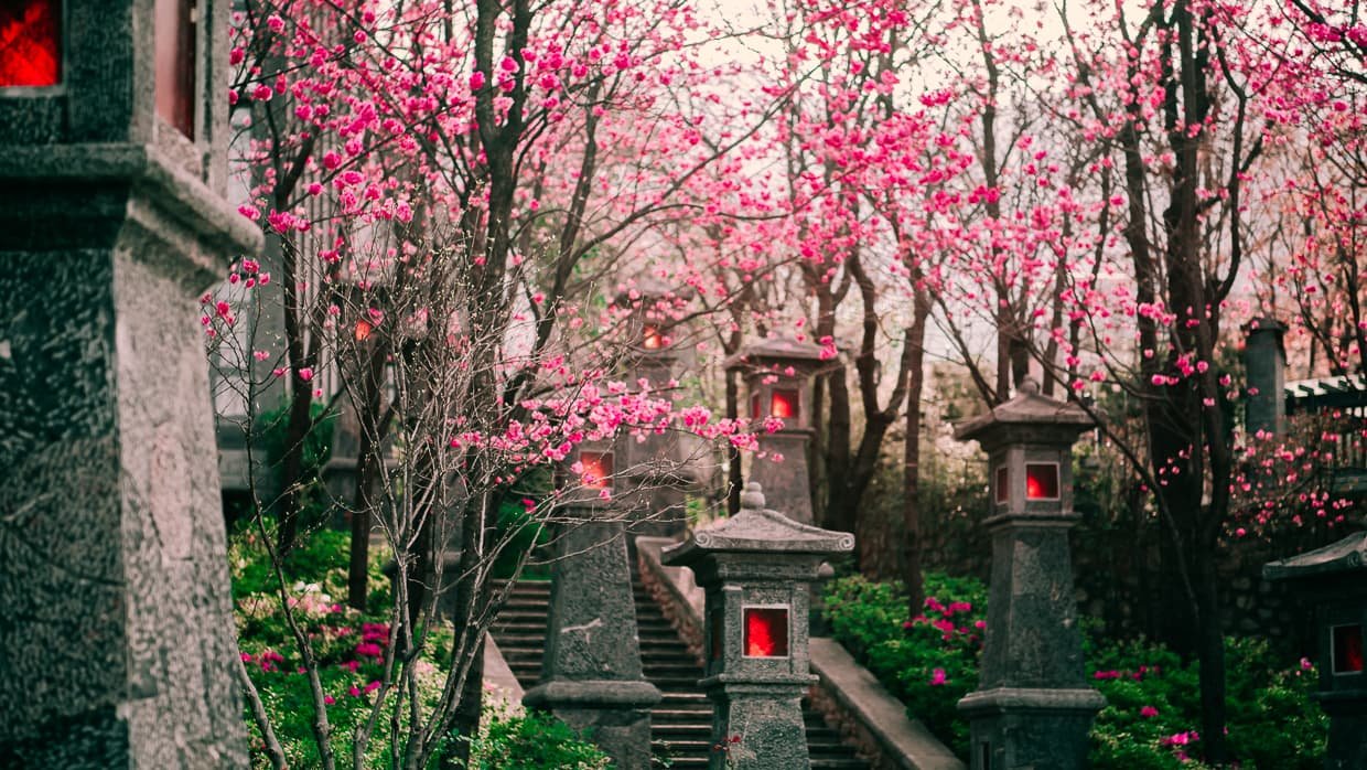 Dali, China. A stone staircase surrounded by cherry blossoms.