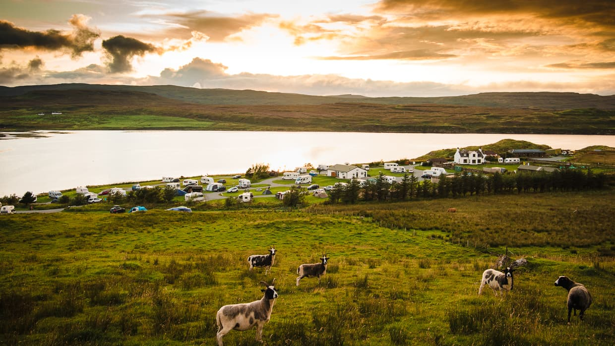 Sheep in front of the Isle of Skye Camping and Caravanning Club Site at Sunset.