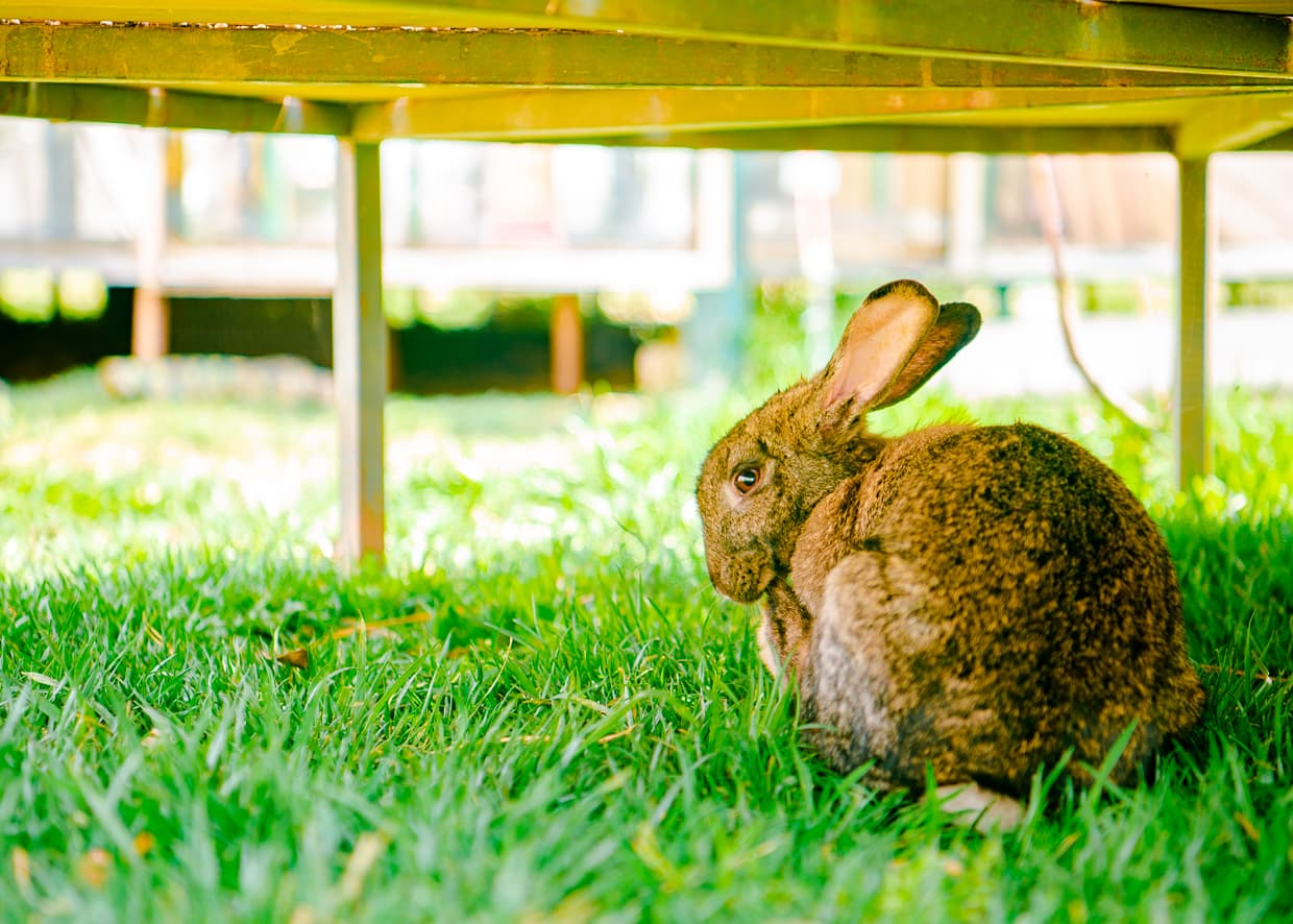 A bunny at a children's farm in Dali.
