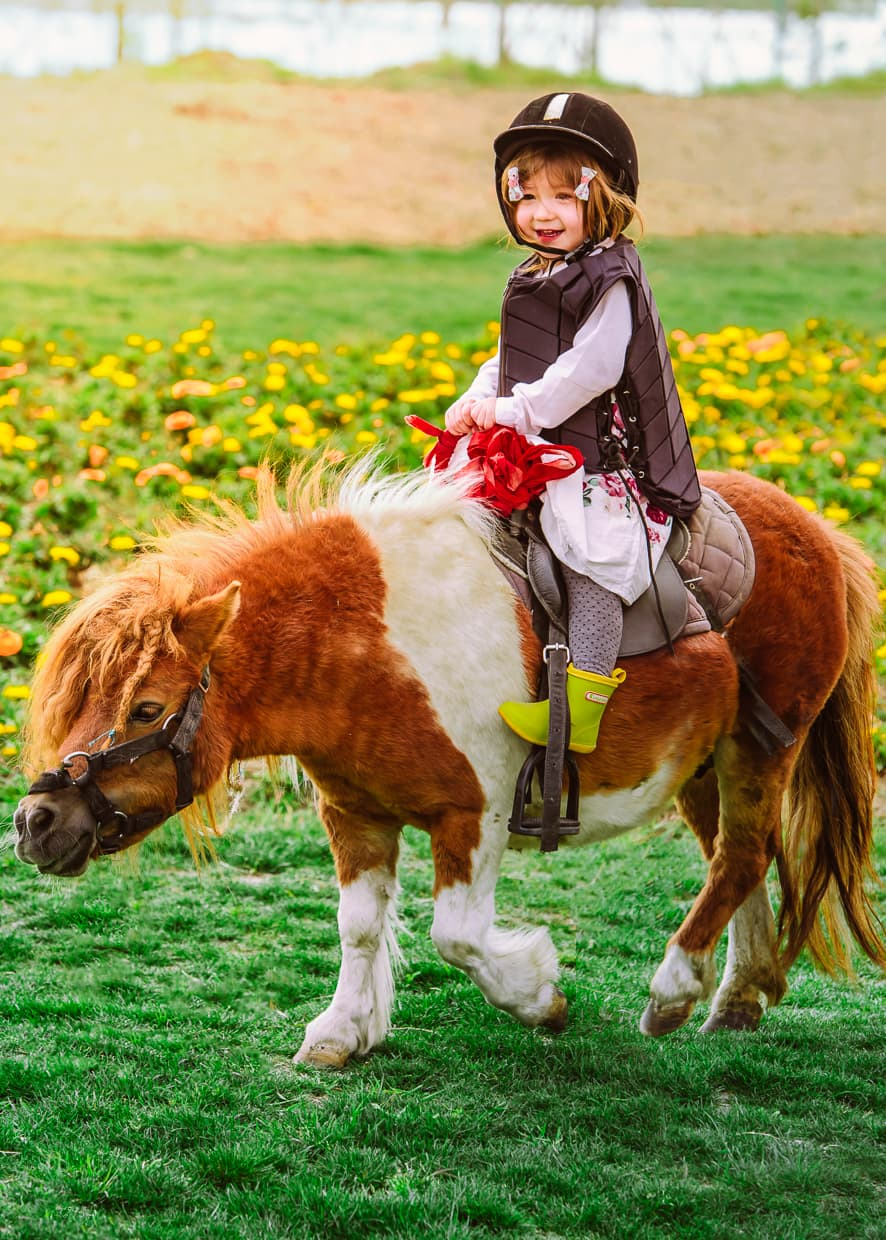 Riding a pony on a Dali, China flower farm.