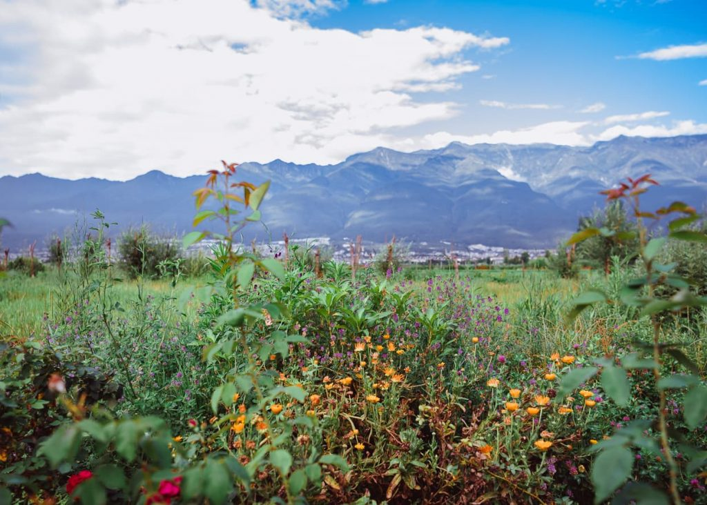 Flowers in front of Mountains in Dali, China. Healthy Blogging Habits.