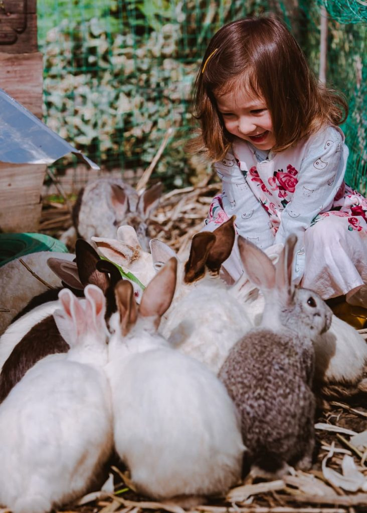 Happy toddler with bunnies.