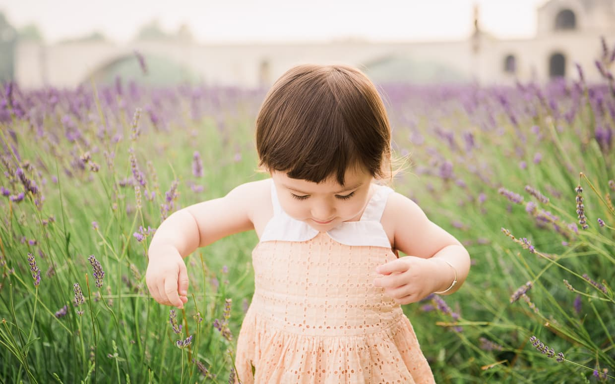 Toddler in a lavender field with deep bokeh.