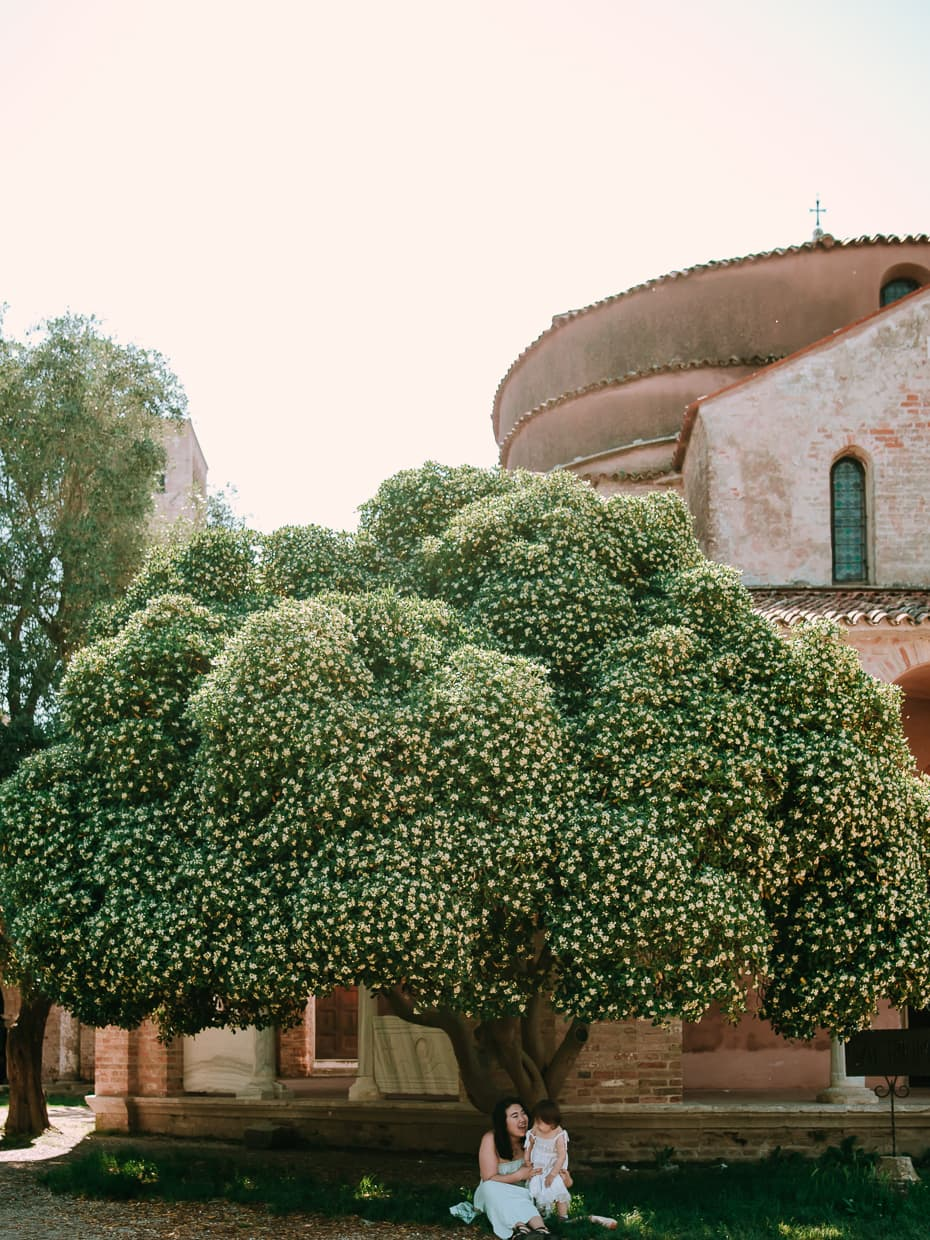 A flowering tree on Torcello, Italy.