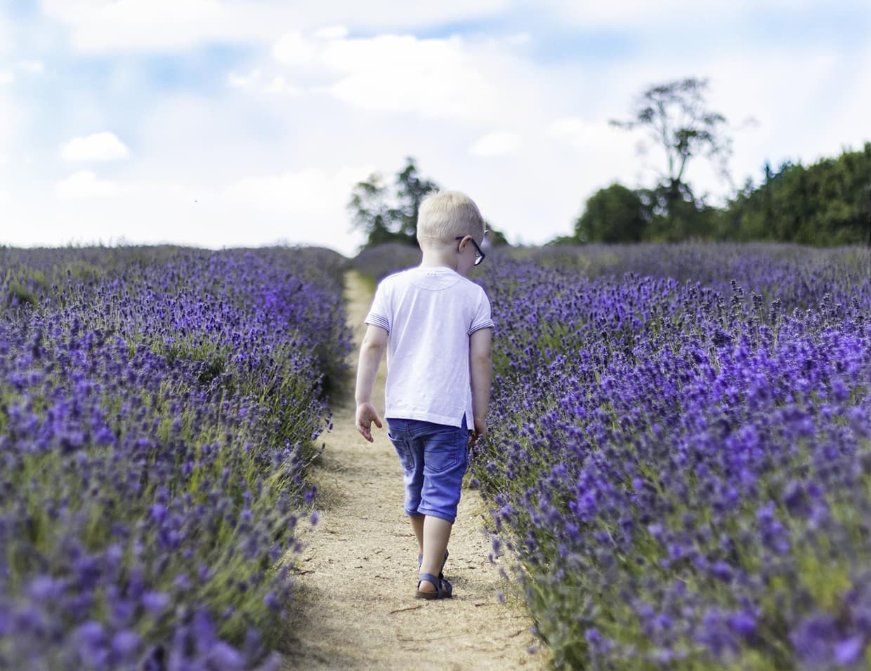 Lavender photography from Victoria Welton of Somerset, England.