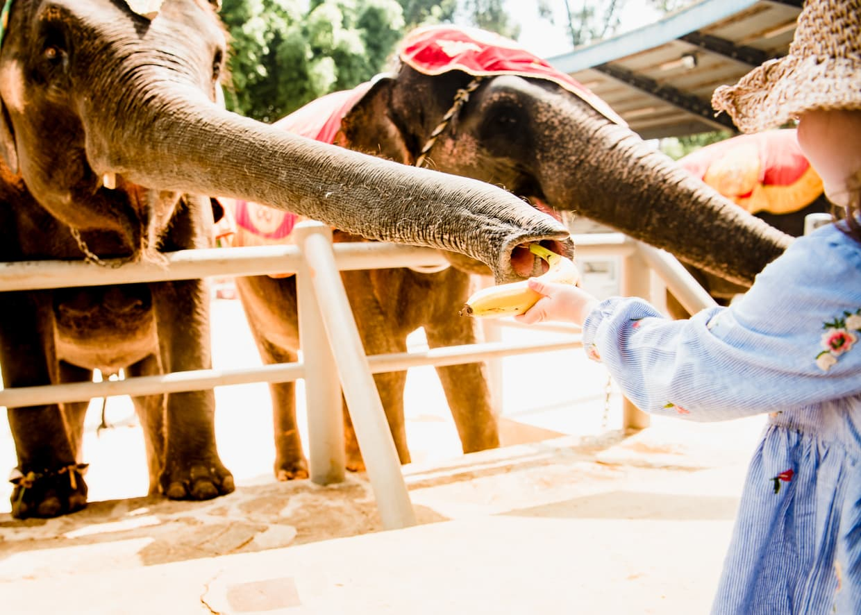 Feeding an elephant at the Yunnan Ethnic Village in Kunming, China.