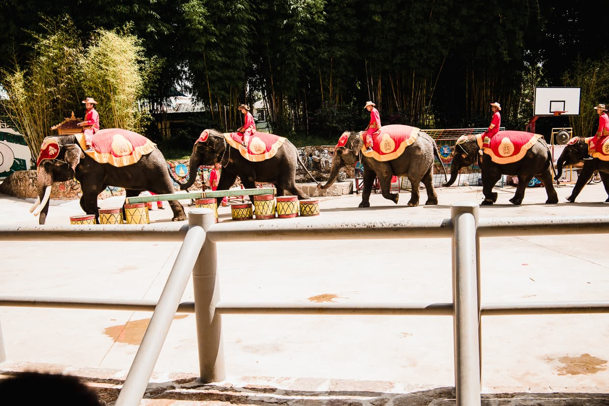 Animal cruelty. Elephant show in Kunming, China.