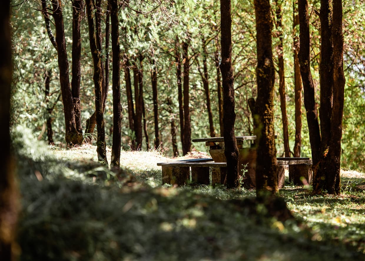 A picnic table in the woods on Lijiang, China's Lion Hill.