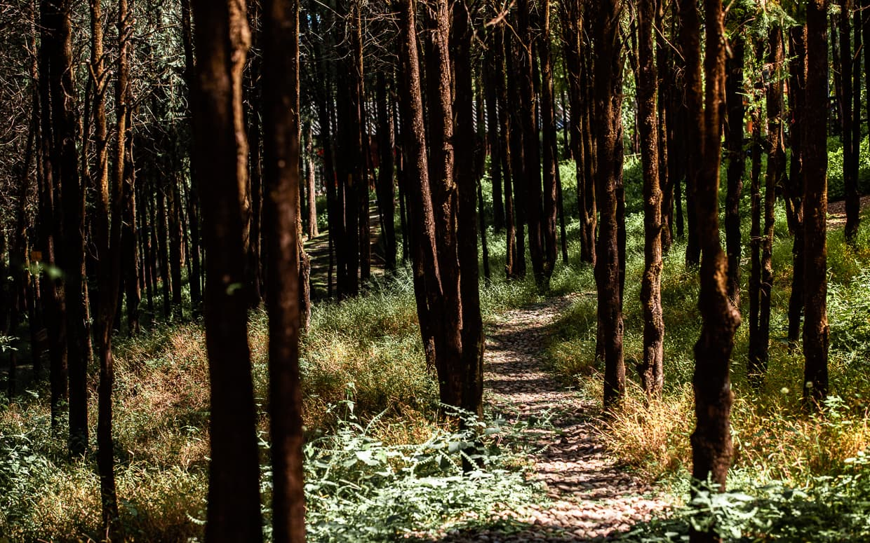 A forest path on Lion Hill in Lijiang, China.
