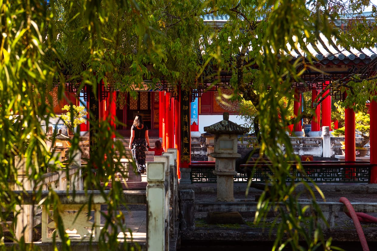 Willow branches and a palace in Lijiang, China.