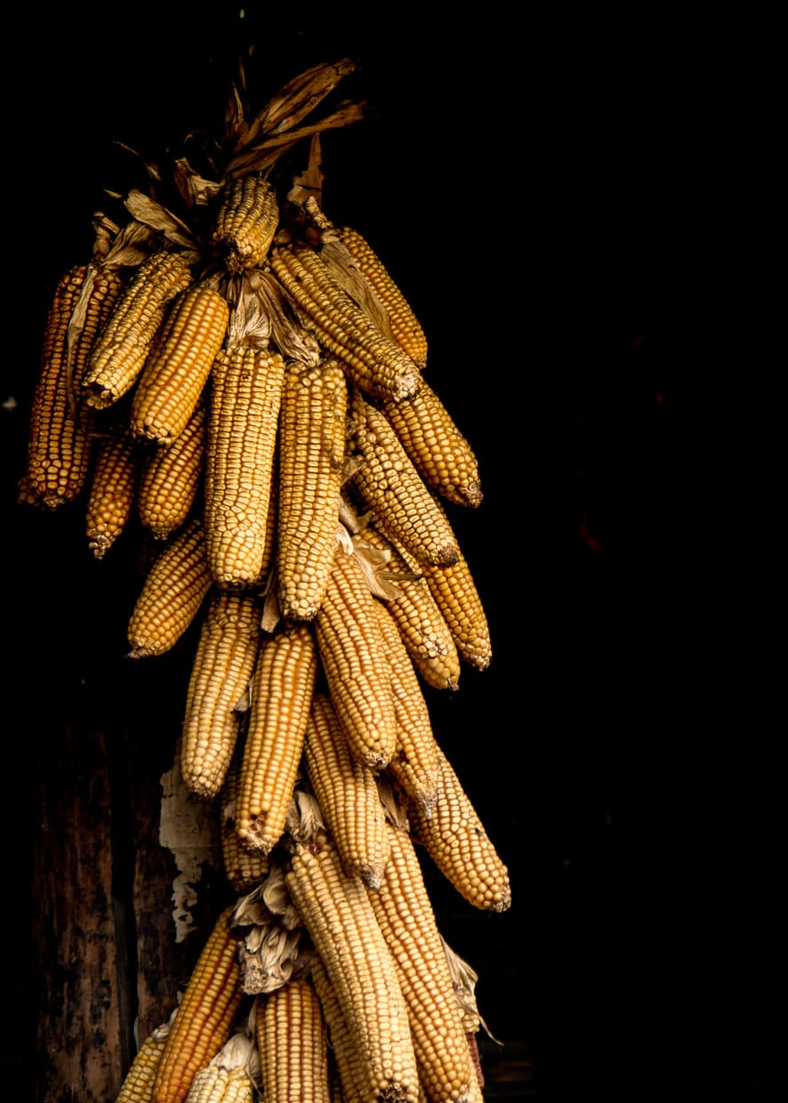 Corn hanging from a rafter.