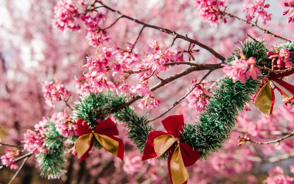 Christmas decorations in a cherry blossom tree.