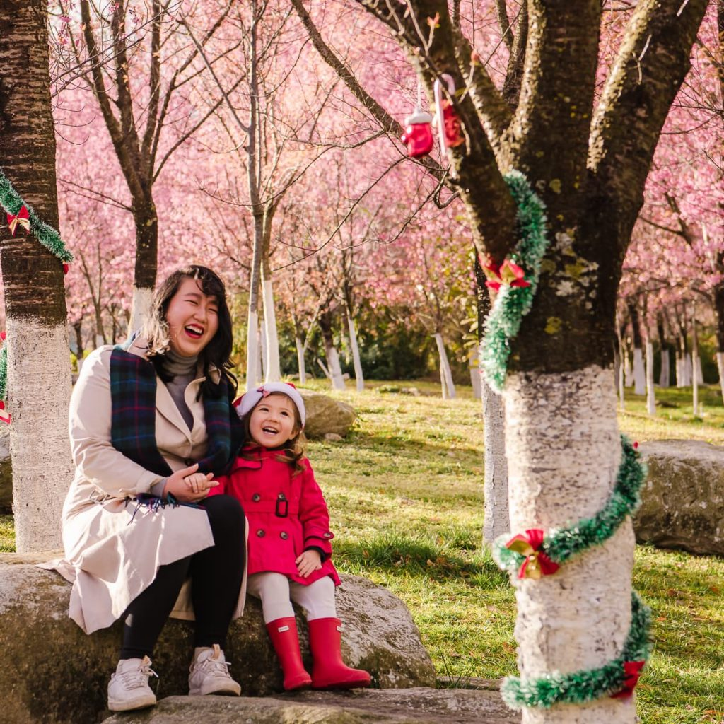 Taking Christmas photos under Cherry Blossom trees in Dali, China.