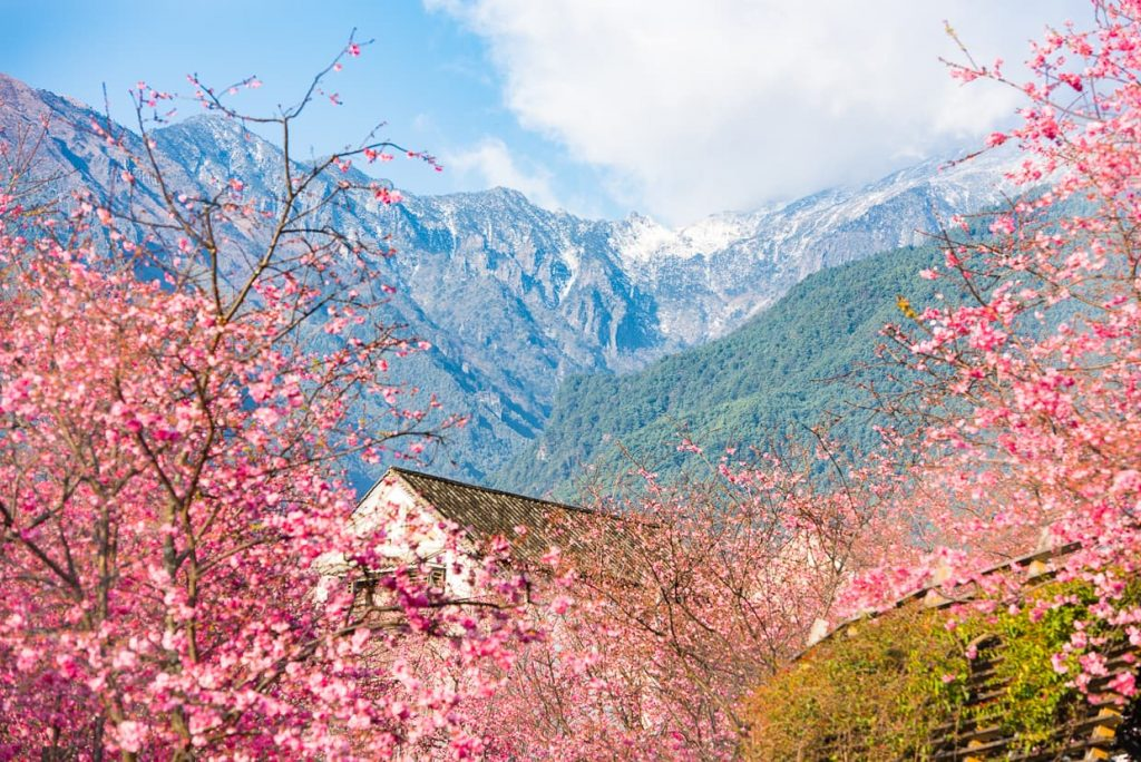 Dali, China's Cherry Blossom Valley in Spring with the Changshan Mountains in the background.
