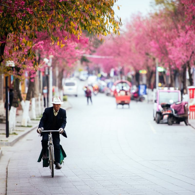 Cherry Blossom season in Dali, China.