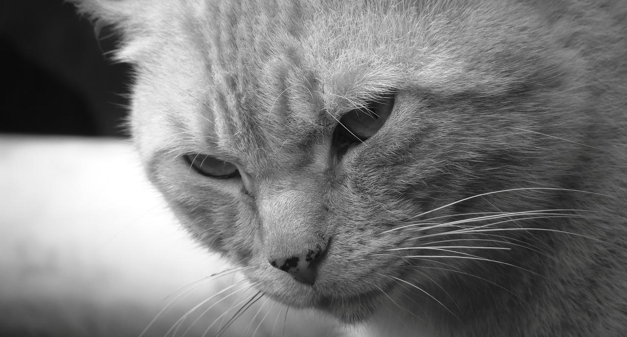UNUSUAL CAT ENCOUNTERS