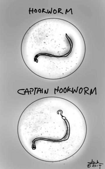 hookworm 1a