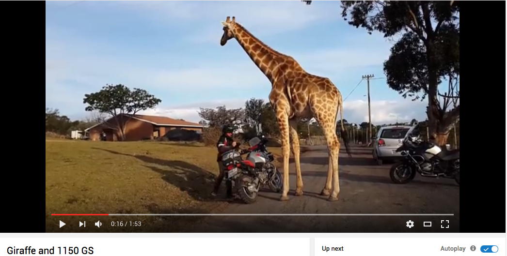 Giraffe and 1150 GS