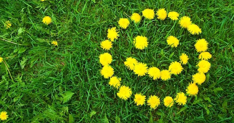 Dandelion smiley face