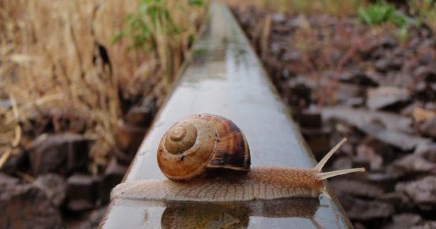 snail crossing train tracks