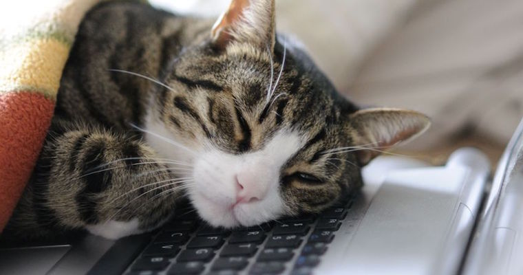 cat sleeping on a macbook pro laptop