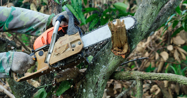 chain saw cutting a tree branch
