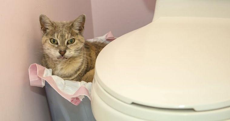 cat in bathroom garbage bin
