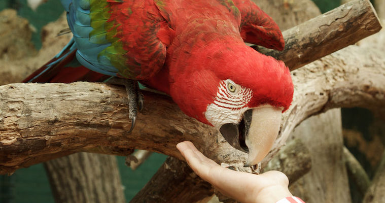 hand feeding a parrot