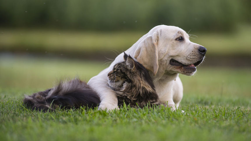 dog and cat hugging in the grass