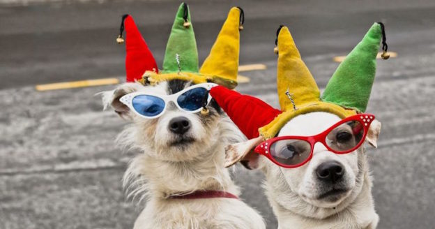 dogs in sunglasses and jester hats