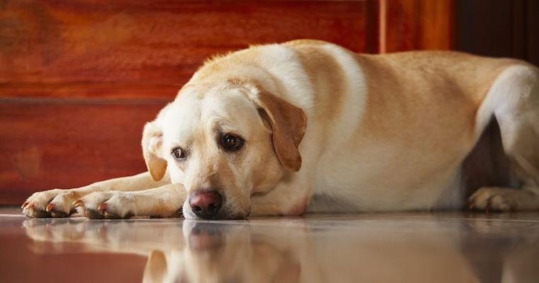 care less dog