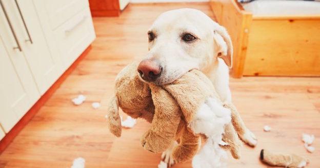 dog bringing a problem