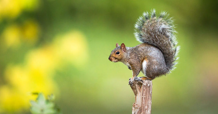 is there a squirrel in your office aha blog